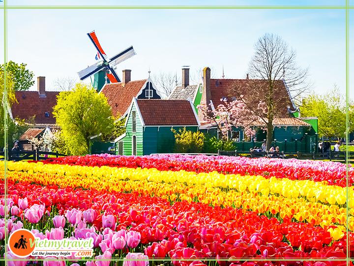 ha-lan-mua-hoa-tulip